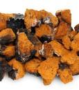 Chaga–Birch-Mushroom