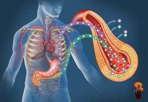 Účinky reishi na diabetes