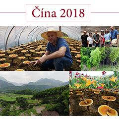 obrázky pestovanie duanwood red reishi v číne