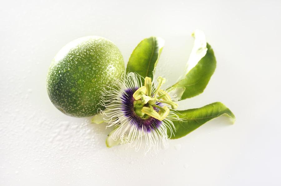Mučenka opletavá - plod a květ - herbár Superionherbs